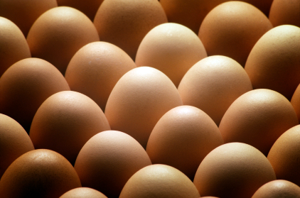 eggs_422x279